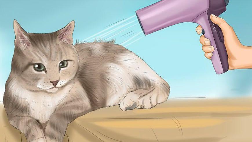 Comment se baigner un chat